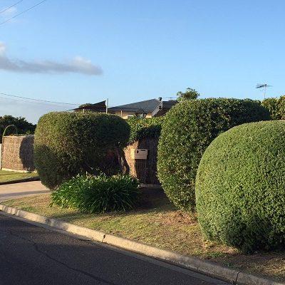 Pruning Gardener Mount Eliza Maintenance