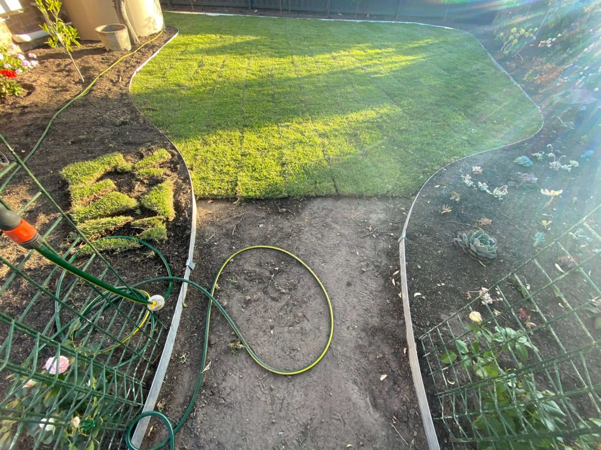 Mount Eliza garden planting and new lawn